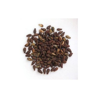 Shivlingi Seeds (Beej) - Bryonia laciniosa