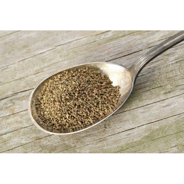 Ajamoda - Ajmod – Celery – Apium graveolens