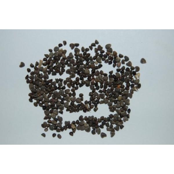 Beejband Seeds (Black)