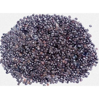 Chasku Seed – Chaksu Seed – Cassia Absus