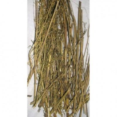 Chirata / Chirayta – Bitterstick – Indian Gentian – Swertia chirayita