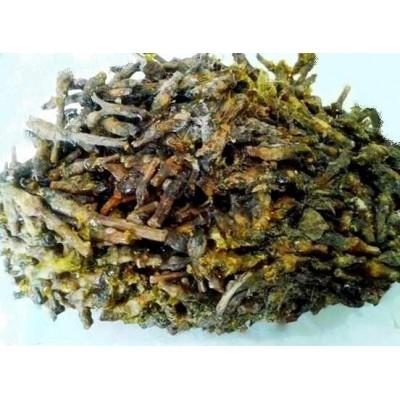 Dikamali – Gandharaj – Gardenia Gummifera