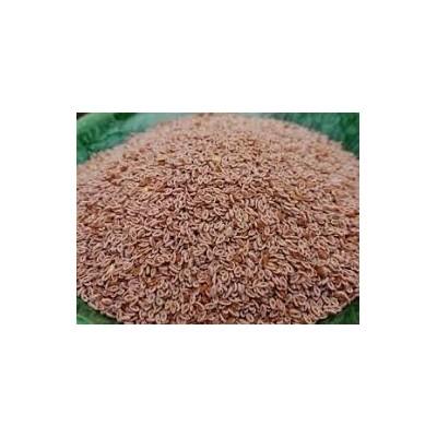 Isabgol Seeds – Plantago Ovata