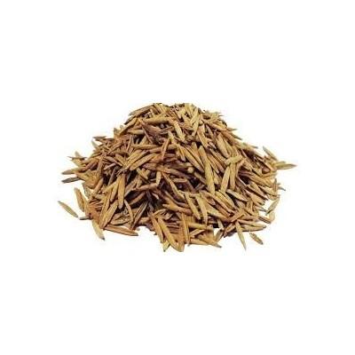 Karva Indrajau – Indrajav – Holarrhena Pubescens