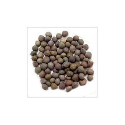 Kat Karanja seeds – Karanjwa – Sagargota – Caesalpinia Bonducella