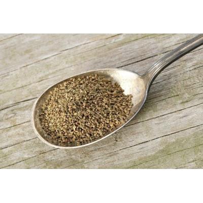Ajamoda/ Ajmod – Celery – Apium graveolens