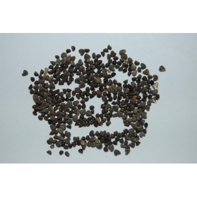 Beejband Seeds (Black)
