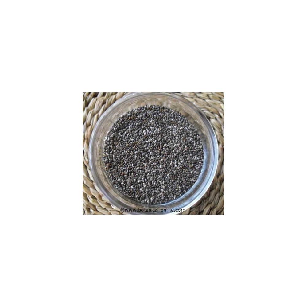 Chia Seeds – Salvia hispanica