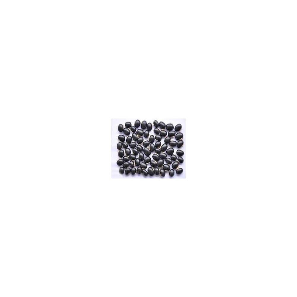 Kaunch Seeds – Kaunch Beej – Mucuna Pruriens (Black)
