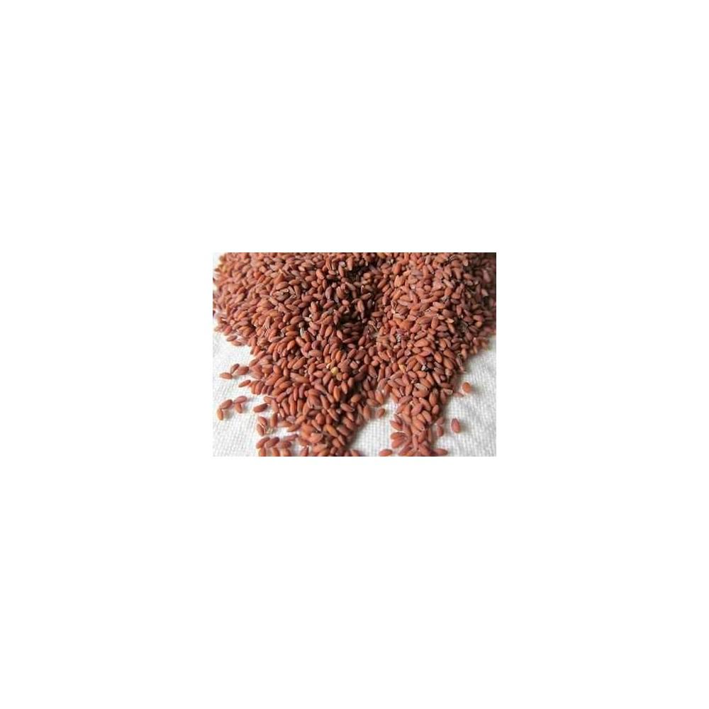 Chandrashoor – Garden Cress – Asalia- Lepidium Sativum