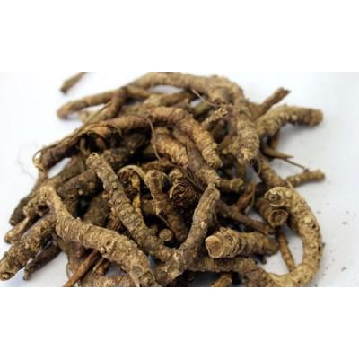 Kutki – Katuki – Picrorhiza Kurroa