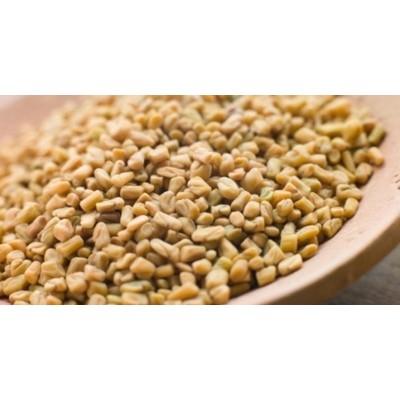 Methi Dana – Fenugreek Seeds – Trigonella Foenum Graecum