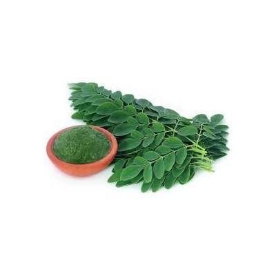 Moringa – Drumstick – Moringa oleifera Leaf